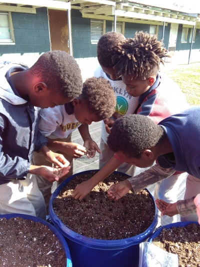 Fifth graders plant kale in their school garden